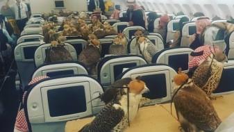Саудиски принц закупи половина авион, за своите соколи