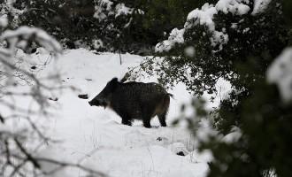 Радиоактивни диви свињи пронајдени во чешките шуми 31 година по катастрофата во Чернобил