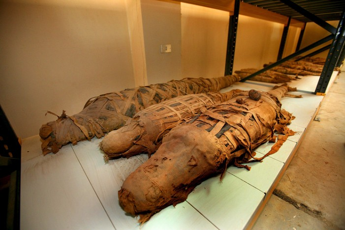 Во Египет откриена мумија на огромен крокодил
