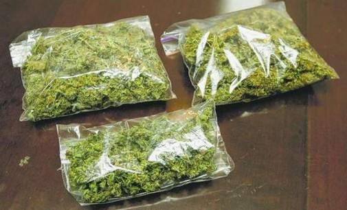 Во Струга пронајдени 42 килограми марихуана