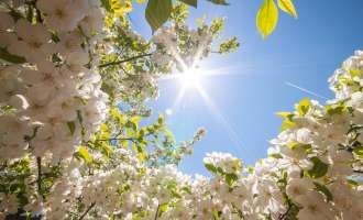 Сончево и топло со мала до умерена локална облачност