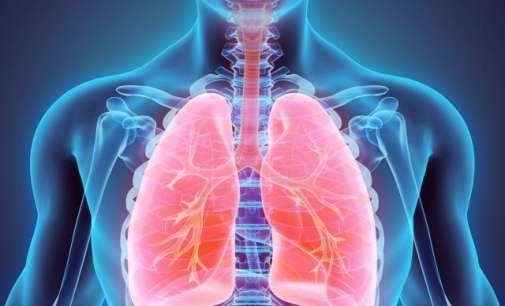 Големо откритие: Белите дробови не се само за дишење, туку и за производство на тромбоцити
