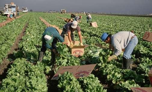 Британските земјоделци ја повикаа Меј да обезбеди слободна трговија со ЕУ
