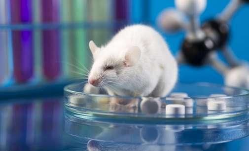 """Создаден првиот вештачки """"ембрион"""" на глушец од матични клетки"""