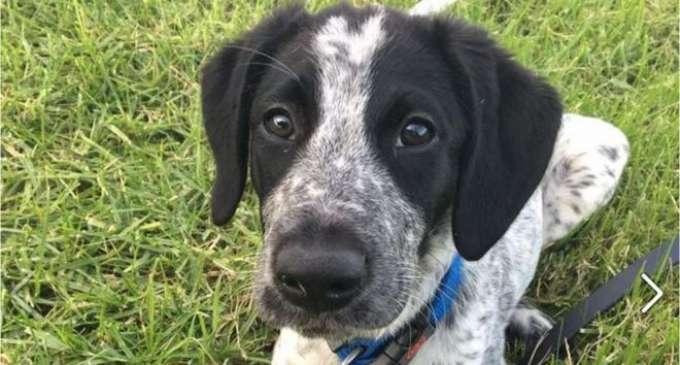 Куче застрелано на аеродромот во Оукленд откако три часа трчало по пистата