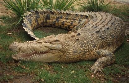 Мозамбик: Млад фудбалер усмртен од крокодил