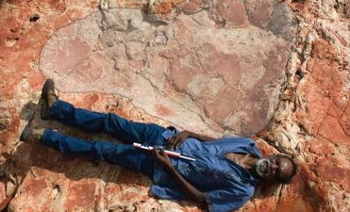 Во Австралија откриена најголемата стапка на диносаурус во светот