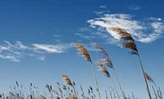 Сончево и топло со засилен северен ветер