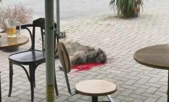 ВИДЕО: Со секира убиено куче среде Скопје бидејќи многу лаело