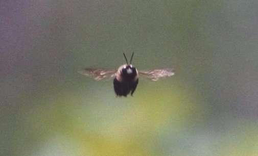 САД привремено запреа изградба на автопат заради пчела