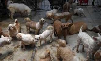 Тајван забрани конзумирање на месо од кучиња и мачки