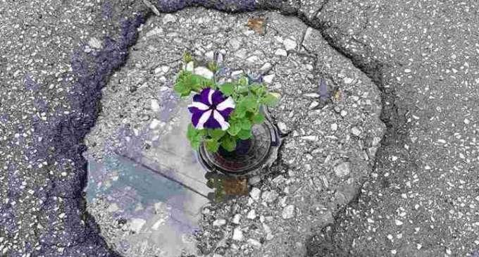 Дупките во општина Цнетар пополнети со цвеќе