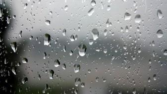 Делови од земјата зафатени со пороен дожд и грмежи