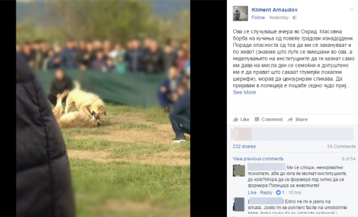 Борби со кучиња во Охрид: Арнаудов: Немоќни сме, полицијата е вмешана – Се спроведуваат ли законите?