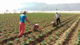 ВМРО-ДПМНЕ: Наспроти ветеното, СДС одвојува 24 милиони евра помалку за земјоделците