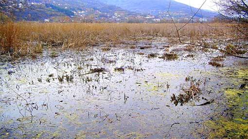 Предавања за екосиситеми во Охрид
