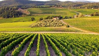 Рурална коалиција: Земјоделците не се вклучени во креирањето политики