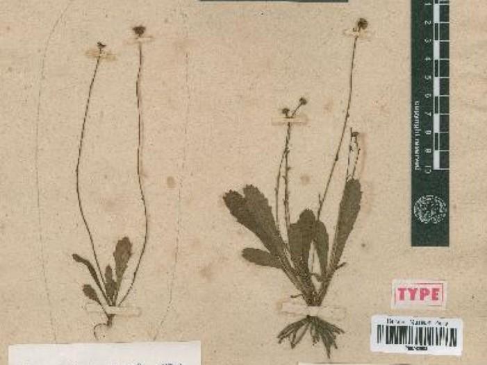 Австралиските цариници уништиле ретка колекција растенија