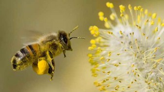 Птиците и пчелите имаат совесност како и луѓето