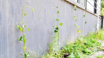 """Акција за озеленување на Скопје под мотото """"Станете урбани херои"""""""