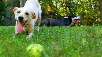 Што значат различните лаења на вашето куче?