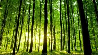 Зеленилото е најдобар лек против депресија