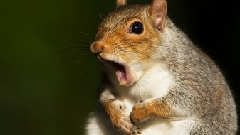 (ФОТО) Агресивна верверица ги тероризира њујорчани