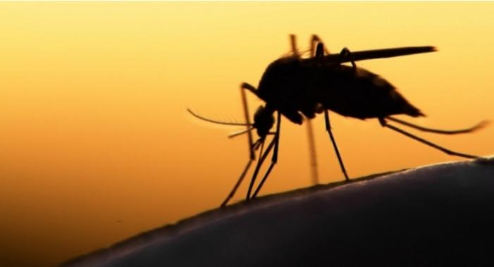 """Пет причини зошто комарците ве """"касаат"""" токму вас"""