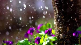 Претпладне сончево, попладне дожд и грмежи