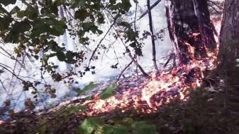 Кривични пријави за две лица, фрлиле догорчиња во сено и предизвикале пожар