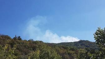 Пожар десно од Крстот на Водно, гори нискостеблеста шума