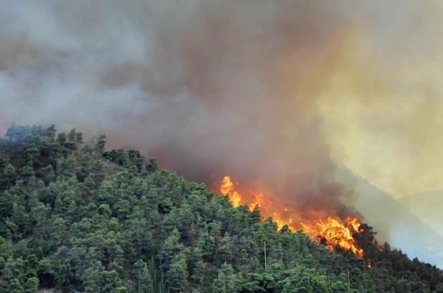 Зголемени контролите во шумите како мерки против шумските пожари