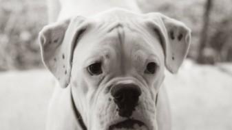 Белград ќе добие гробишта за домашни миленичиња