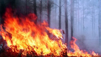 Пожарникари фатија пироман кај кривопаланечкото село Габар