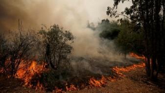 Пожарот на Плетвар е сèуште активен