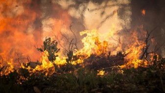 Локализиран големиот шумски пожар во Кривопаланечко
