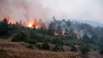 Пожарот покрај патот Битола-Прилеп сèуште е активен