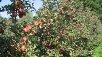 МЗШВ ќе ги обесштети земјоделците што претрпеа штети од невремето на 11 септември