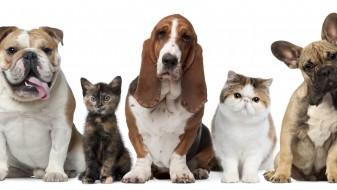Одбележување на Светскиот ден на животните