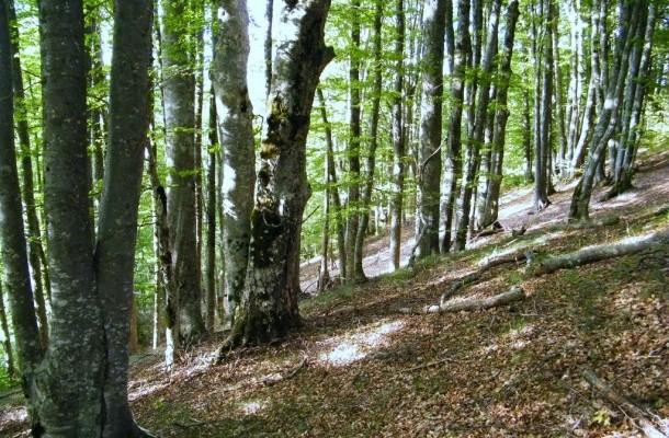 Владата ќе прави шумски катастар