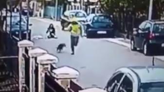 (Видео) Бездомно куче стана херој откако спаси девојка од крадец