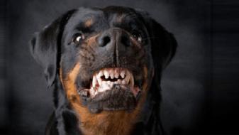 Куче искаса деца и жени во Аеродром