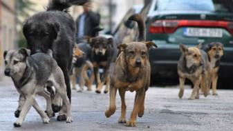 Двајца скопјани искасани од кучиња скитници