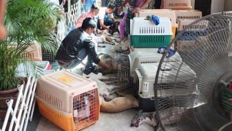 (Видео) Филипини: 30 кучиња починале во загреано комбе, сопственикот се соочува со затворска казна од 90 години