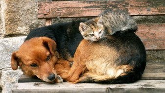 Хуманитарна акција: Изработка на привремени засолништа за бездомните животни