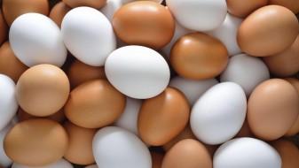 Европските експерти предупредуваат на сѐ повеќе труења од салмонела