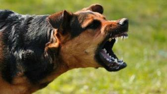 Maж пријавил напад од волчјак, кучето било во придружба на човек