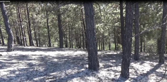 ФАО ги поддржува напорите на земјата за спроведување национален инвентар за шумите