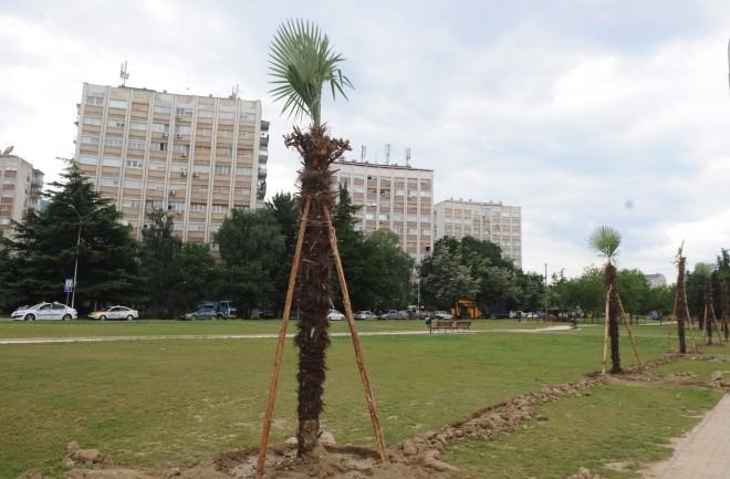За Денот на дрвото биле потрошени 17 8 милиони евра  а за палмите половина милион евра