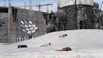 (Фотовест) Фонтаната на плоштадот – спална за бездомните кучиња